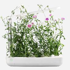 جهاز Table Box لزراعة الورود